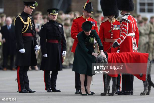 Catherine Duchess of Cambridge presents a shamrock to The Regimental mascot Irish Hound as Prince William Duke of Cambridge stands with the 1st...