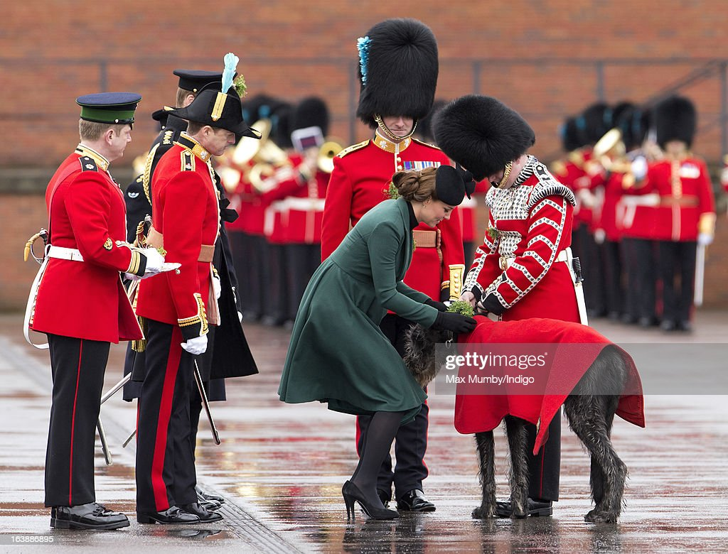 Catherine, Duchess of Cambridge presents a sprig of Shamrock to Domhall, the Irish Wolf Hound Regimental Mascot of the Irish Guards during the St Patrick's Day Parade at Mons Barracks on March 17, 2013 in Aldershot, England.
