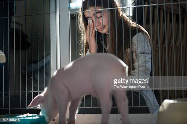 Catherine Smith age 12 tears up while she and her family say goodbye to a rescued piglet that is being adopted the Poplar Springs Animal Sanctuary in...