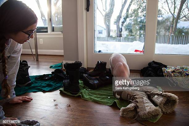 Catherine Smith watches over Wee Wee the piglet January 25 2016 in Chevy Chase Maryland Smith and her family rescued the piglet during winter storm...