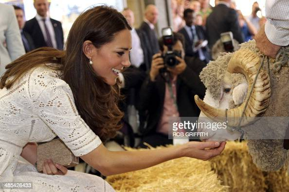 Catherine the Duchess of Cambridge pats 'Fred the Merino Ram' during a visit to the Royal Easter Show in Sydney on April 18 2014 Britain's Prince...