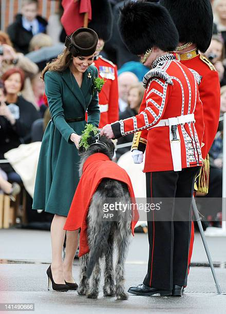 Catherine the Duchess of Cambridge presents a bunch of shamrock Ireland's threeleafed floral emblem to the regimental mascot Conmeal of the 1st...