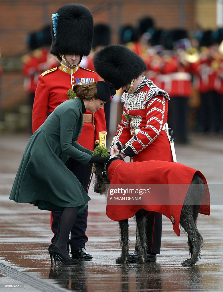 Catherine, the Duchess of Cambridge, presents a bunch of shamrock, Ireland's three-leafed floral emblem, to the regimental wolfhound mascot of the 1st Battalion Irish Guards during St Patrick's Day parade in Mons Barracks in Aldershot on March 17, 2013. William, the Duke of Cambridge attends the parade as Colonel of the Regiment and Catherine presents the traditional sprigs of shamrocks to the Officers and Guardsmen of the Regiment. AFP PHOTO/ADRIAN DENNIS