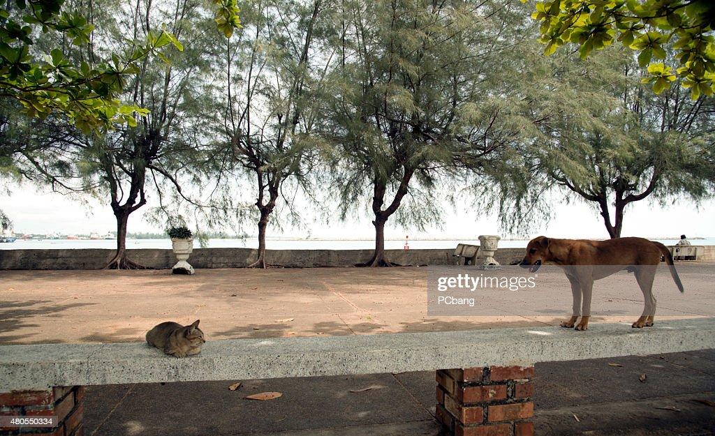 Gatos e cães : Foto de stock