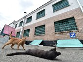 Cats are pictured in the yard of Lukyanivska prison in Kiev during a presstour organized by Ukrainian Ministry of Justice on July 19 2016 / AFP /...
