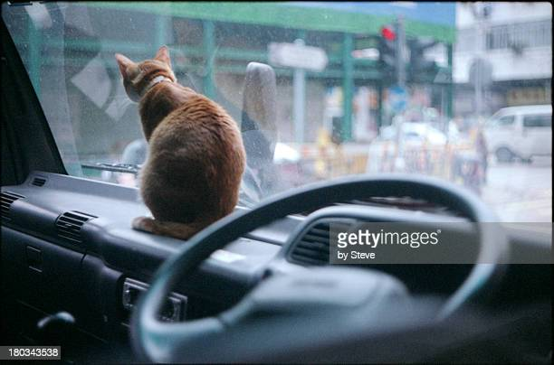 Cats at truck