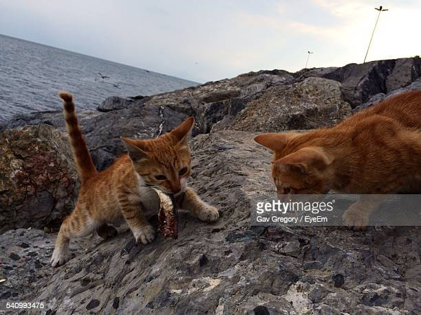 Cats Eating Fish On Shore Against Sky