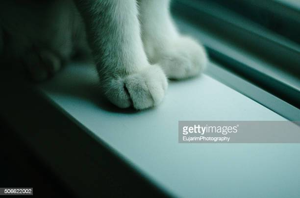Cat's front paws