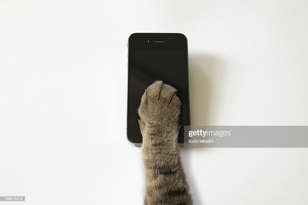 Cat's hand to operate the touch panel. : Stock Photo
