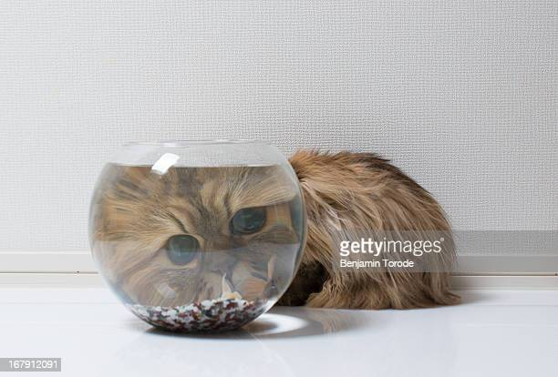 Cat's head magnified behind fish bowl
