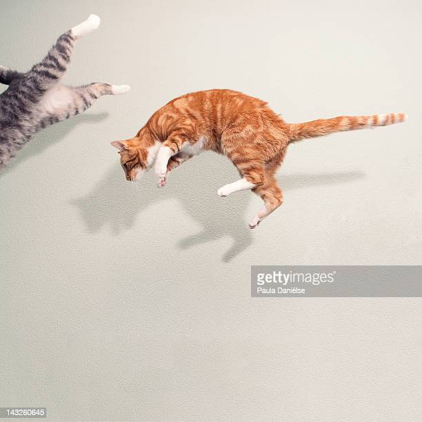 Cats in mid air against white wall
