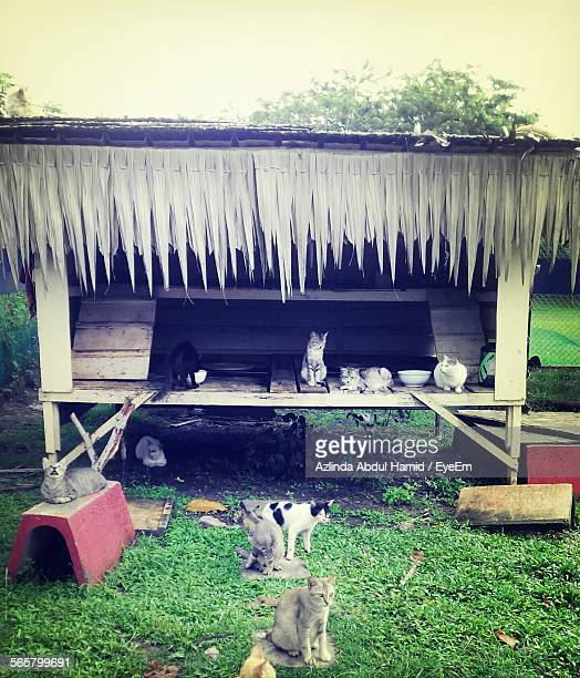 Cats In Shed At Animal Shelter