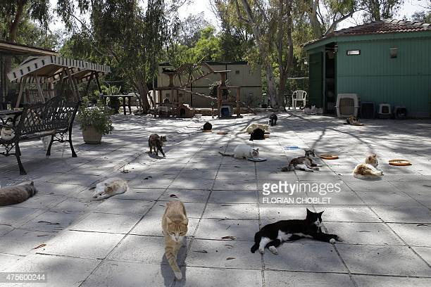 Cats lay on the ground at the Malcom Cat Protection Society shelter on April 22 2015 in the Sovereign Base Area of Akrotiri a British overseas...