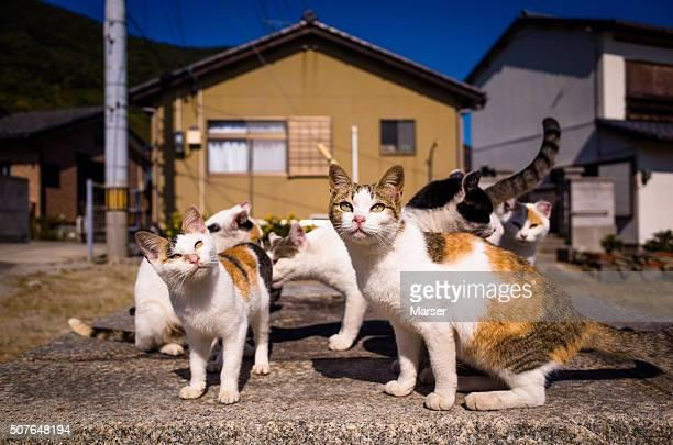 Cats living in Sanagi Island