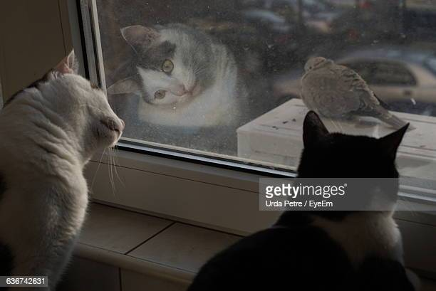 Cats Looking At Pigeon Through Window Glass