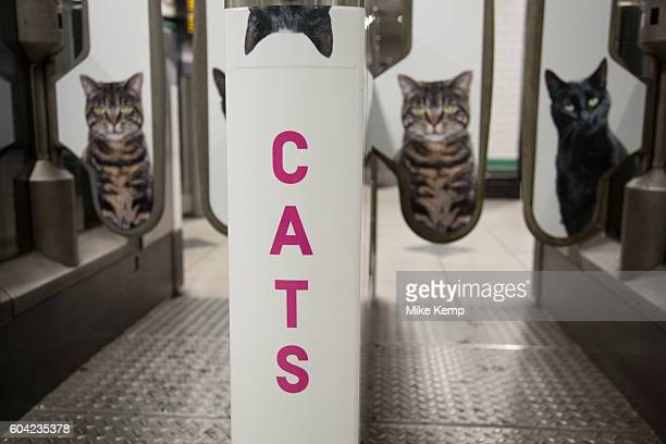 Cats not Ads campaign at Clapham Common tube station is the first campaign organised by Glimpse an open and voluntary collective for creative people...