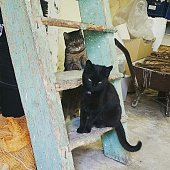 Cats On Wooden Ladder