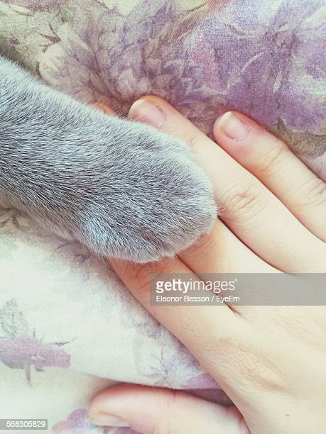 Cats Paw And Hand