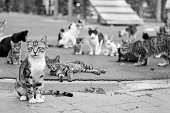 Large group of cats - outdoor - black and white