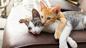 Huging Lovely Kitty laying down together