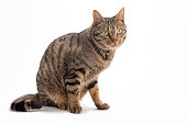 Portrait of a cat by white background,