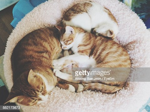 Cats Relaxing On Pillow Stock Photo Getty Images