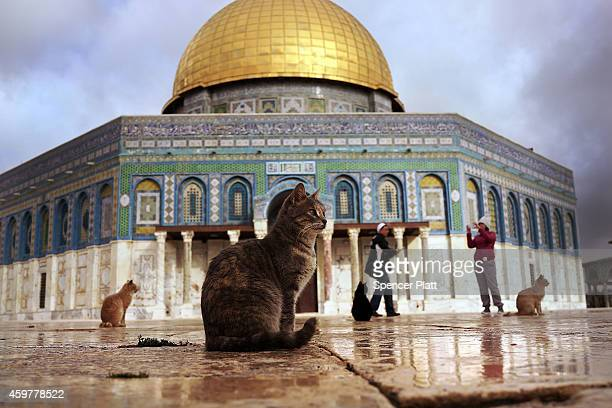 Cats sit near the Dome of the Rock at the AlAqsa mosque compound in the Old City on December 01 2014 in Jerusalem Israel The Dome of the Rock is the...