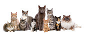 Many Cats sitting in a row, in front of a white background