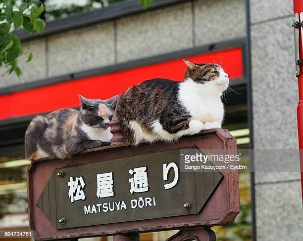 Cats Sitting On Wooden Road Sign