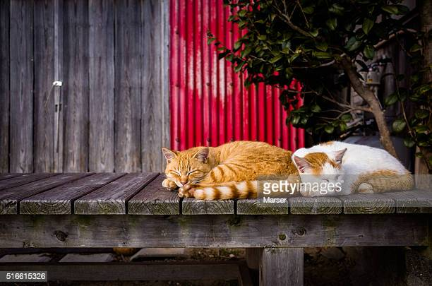 Cats sleeping on the bench
