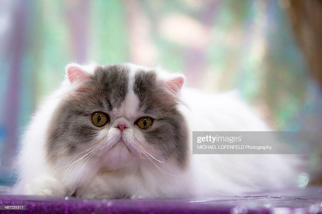 Cats vs. Dogs : Stock Photo