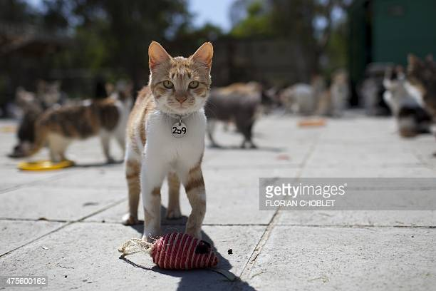 Cats wait for food at the Malcom Cat Protection Society shelter on April 22 2015 in the Sovereign Base Area of Akrotiri a British overseas territory...