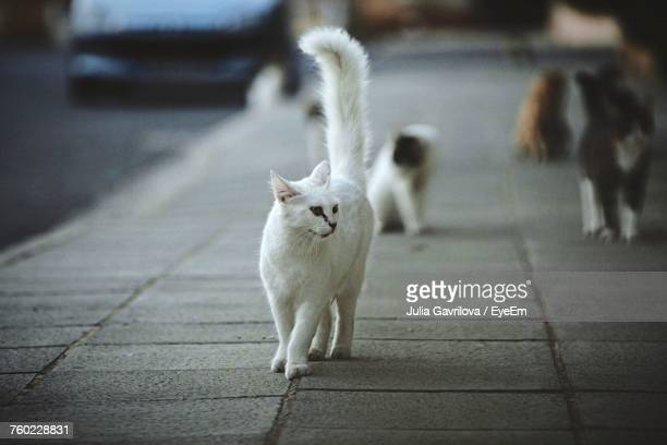 Cats Walking On Pathway At City