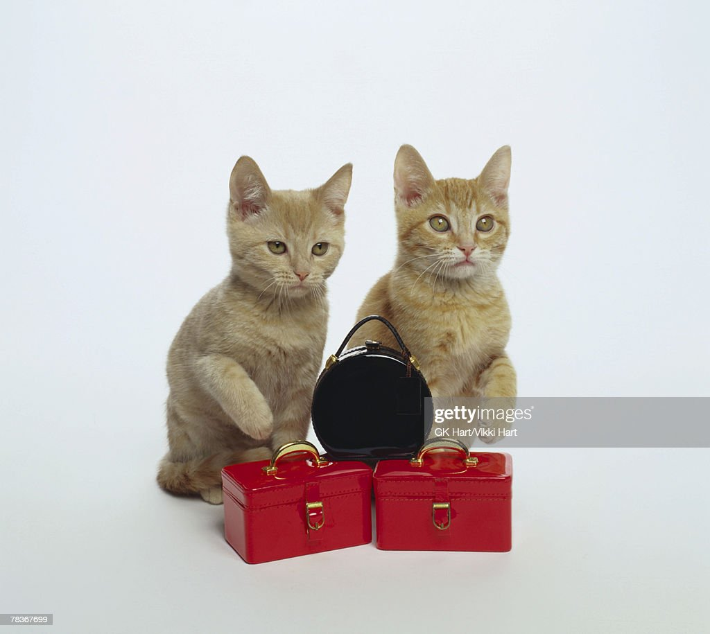 Cats with luggage