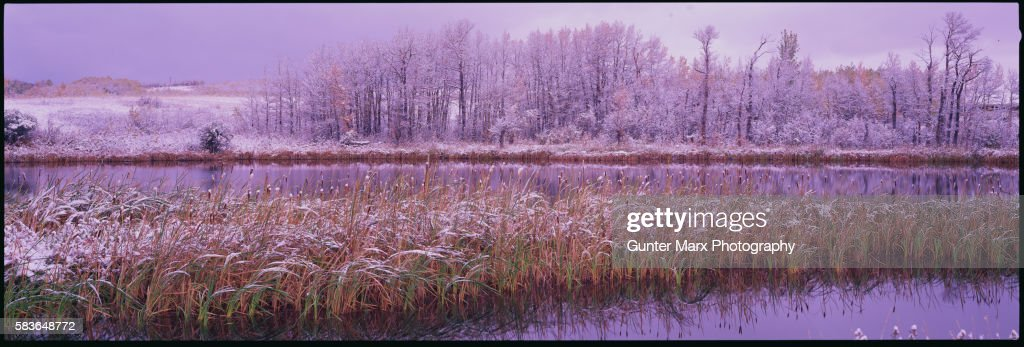 Cattails and Winter Landscape