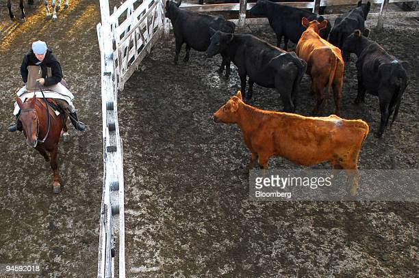 Cattle are penned up at the Liniers Livestock Market in Mataderos a suburb of Buenos Aires Argentina on Wednesday May 16 2007 Agricultural economics...