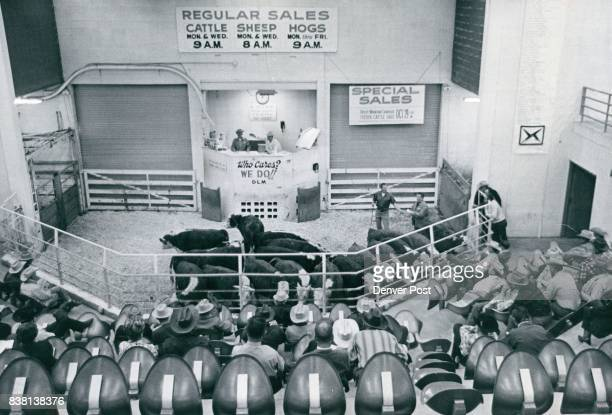 Cattle Buyers Gather to Bid on fat cows at a regular Denver Livestock Market sale When livestock industry was highly centralized about seven million...