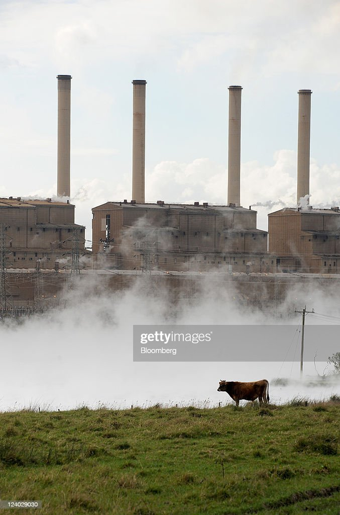 Cattle graze as steam rises from the cooling pond outside International Power Plc's Hazelwood coal-fired power station in the Latrobe Valley, Australia, on Wednesday, Sept. 7, 2011. Australian prime minister Julia Gillard's plan to make factories and utilities either cut the nation's greenhouse gases or pay for pollution-curbing programs abroad may force companies to buy an average 66 million metric tons of credits a year starting in 2015, sending prices up 28 percent. Photographer: Carla Gottgens/Bloomberg via Getty Images