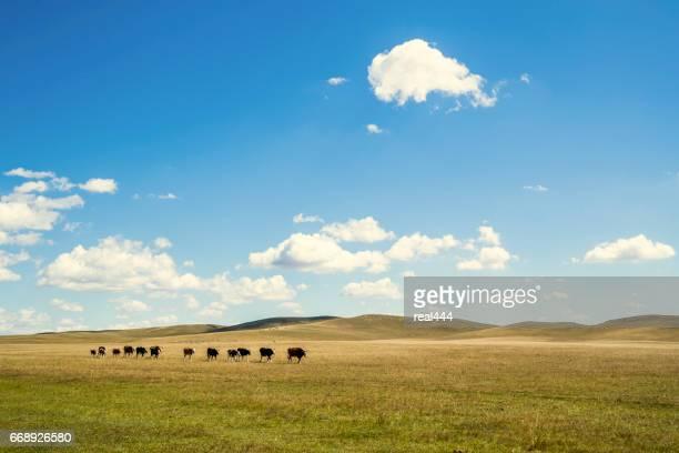 日当たりの良い牧草地に牛が放牧されて