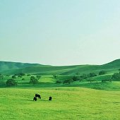 Cattle Grazing On Green Landscape Against Clear Sky