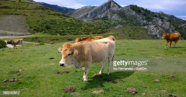 Cattle On Field Against Mountain