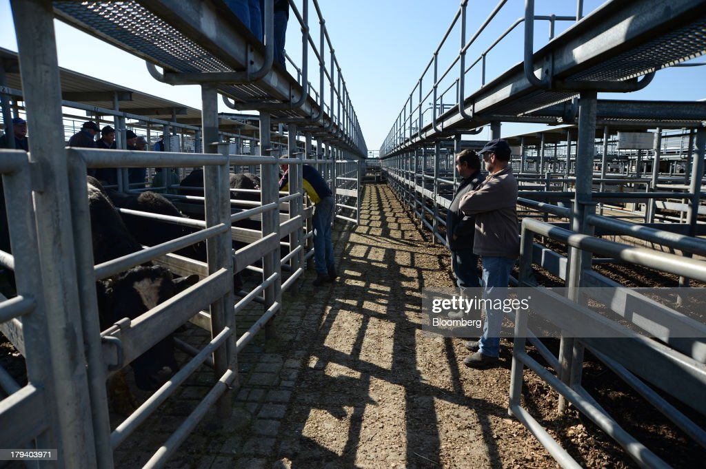 Cattle owners stand outside bull pens during a live cattle auction at the Central Victoria Livestock Exchange in Ballarat, Australia, on Monday, Sept. 2, 2013. Australia exports A$30.5 billion ($29.4 billion) of food per year and produces enough to feed the nation of 23 million people twice over, according to the National Food Plan released by the Department of Agriculture, Fisheries and Forestry. Photographer: Carla Gottgens/Bloomberg via Getty Images