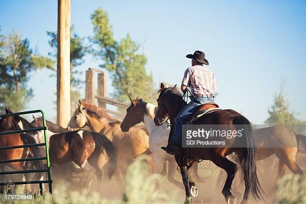 Bovin rancher en chevaux en corral
