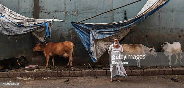 Cattle stand at a roadside cow shelter known as a goshala in Mumbai India on Tuesday March 10 2015 The government of the state of Maharashtra last...