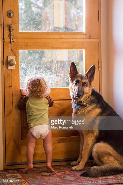 Caucasian baby and dog looking out window