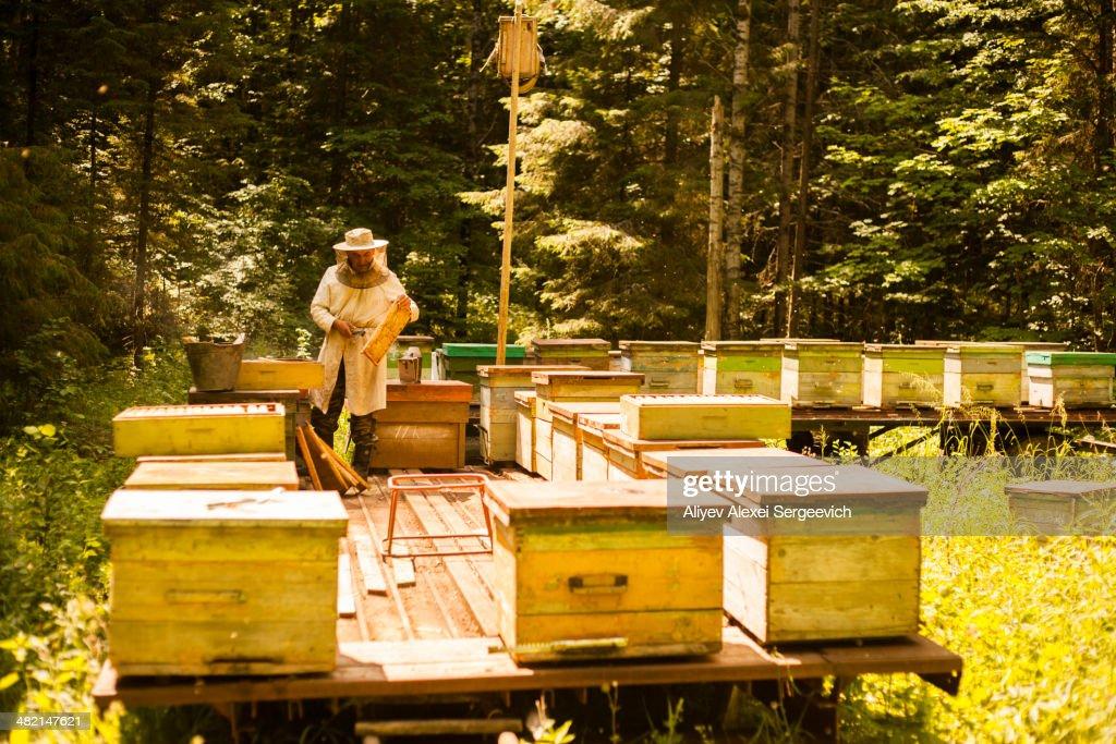 Caucasian beekeeper working outdoors