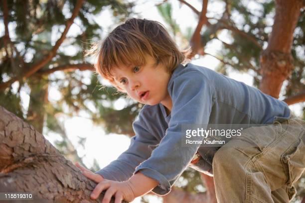 Caucasian boy climbing tree