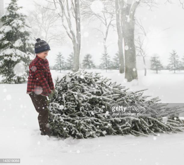 Caucasian boy dragging Christmas tree through the snow