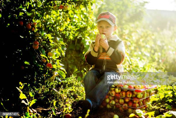 Caucasian boy eating apples in orchard