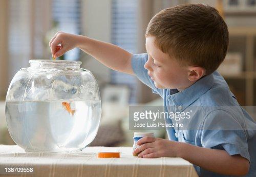 Caucasian boy feeding fish in fish bowl